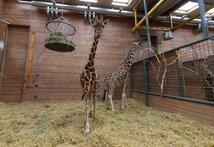 CNN.co.jp : キリン処分の動物園に ...