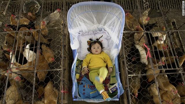 インフルエンザ 発生 状況 鳥