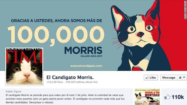 ネコが市長選に出馬? 「ネズミどもにうんざり」 メキシコ