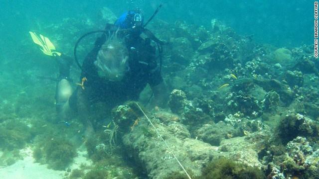 2003年に見つかった沈没船がクリストファー・コロンブスの「サンタマリア号」だった可能性が強まったという