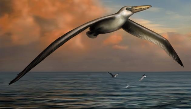 CNN.co.jp : 史上最大の飛べる鳥...
