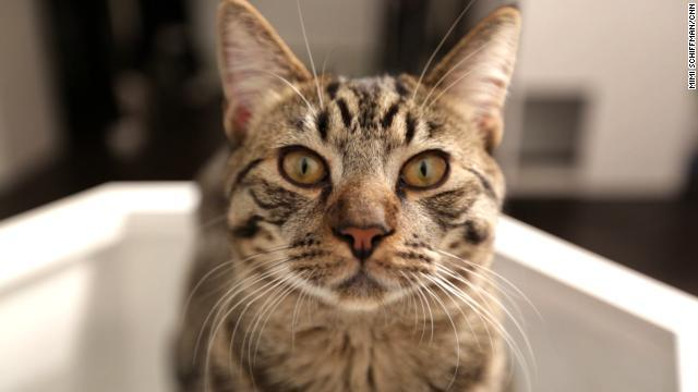 【どうぶつ】なぜインターネットはこれほど猫だらけなのか…飲み物に例えれば、犬はホットココア、猫はグレープフルーツジュースだ