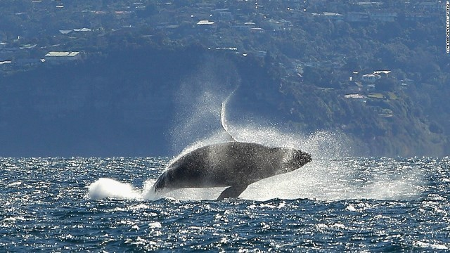 クジラの画像 p1_31