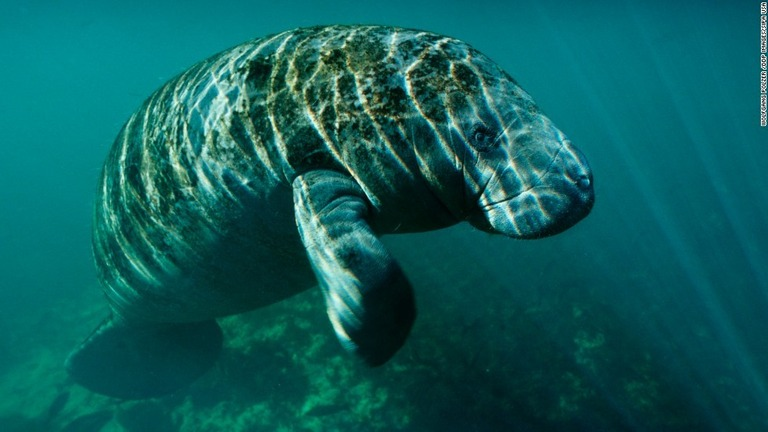 種 絶滅 危惧 野生生物を守る|WWFの活動 |WWFジャパン