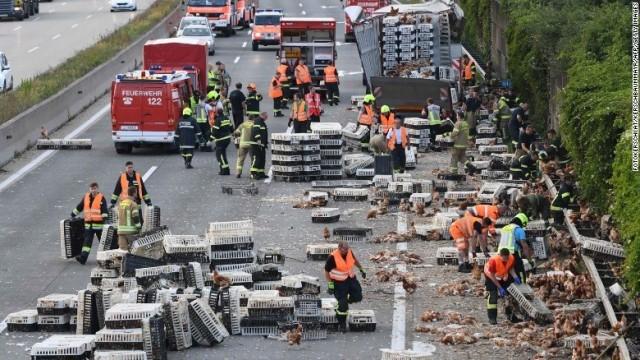 CNN.co.jp : ニワトリ数千羽が事故で脱走、幹線道路封鎖 オーストリア