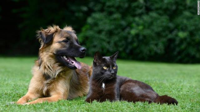 【CNN】「犬は猫よりも賢い」、国際研究で結論 神経細胞数を計測 ★2 YouTube動画>2本 ->画像>72枚