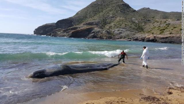 マッコウクジラの画像 p1_6