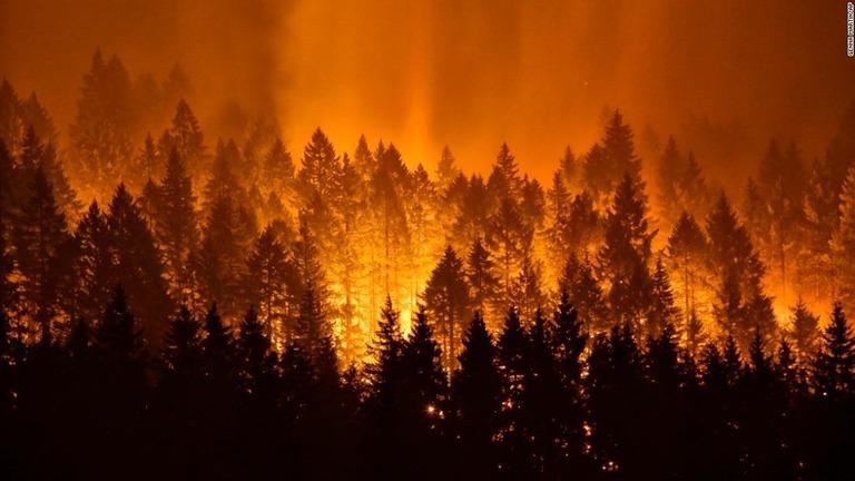 山火事で194平方キロ焼失、少年に40億円の支払い命令