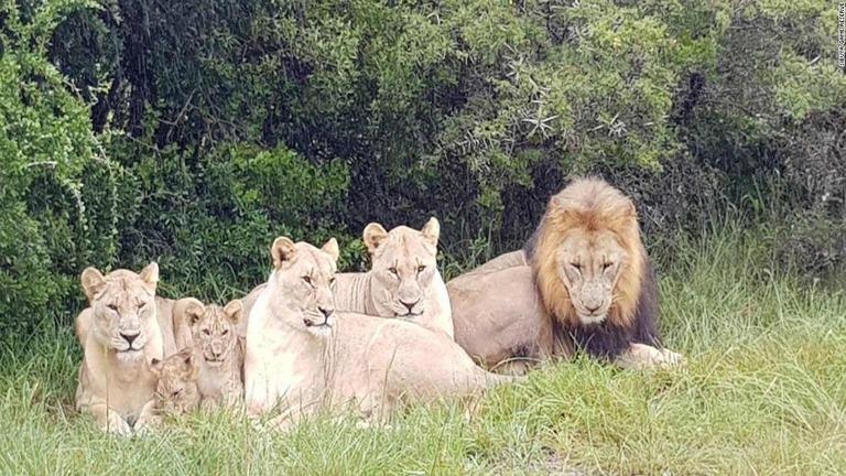 CNN.co.jp : ライオンがサイの密...