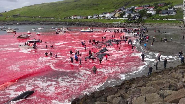 01 faroe islands whaling restricted super 169 - 【反捕鯨】フェロー諸島の鯨漁で海が赤く染まる写真 保護活動家「動物を殺して楽しむ野蛮な国」と批判 漁民「大切な食料だ」と反論★2