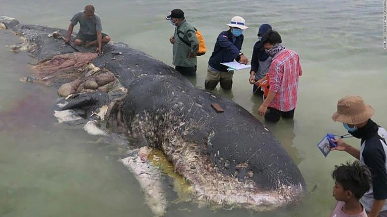 クジラの画像 p1_36
