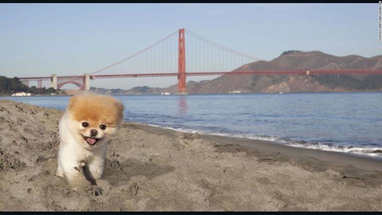 cnn co jp 世界一かわいい犬 が死ぬ ポメラニアンのブゥ