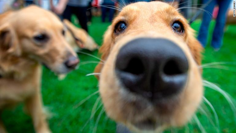 CNN.co.jp : 犬を飼うと早死にのリスク低減、米医学誌に研究報告2件