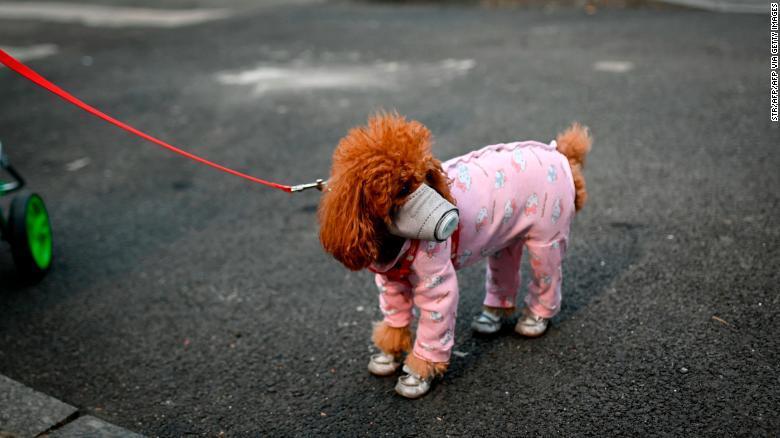症状 ウイルス 犬 コロナ 新型コロナウイルス感染症の症状・知っておくべき注意点 [感染症]