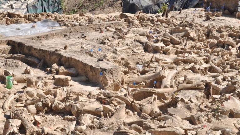 マンモス60頭の骨格で構成、謎の建造物を発掘 ロシア