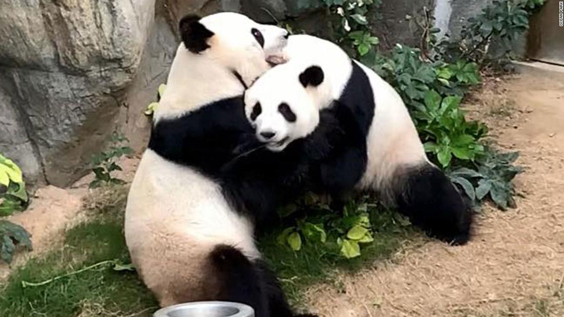 パンダ 写真