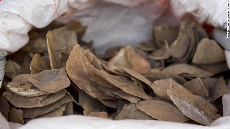 漢方 センザンコウ 【動物・いきもの】【CNN】希少哺乳類センザンコウ、漢方薬への使用認めず 中国政府が規制改訂