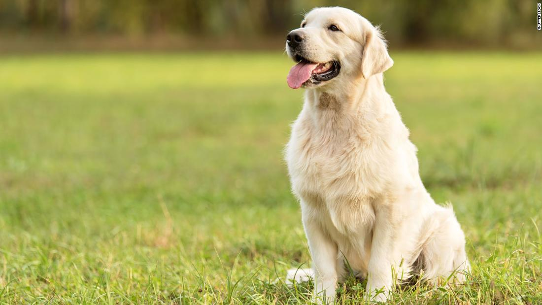 CNN.co.jp : 「犬の1年は人間の7年」誤り?、年齢ごとの成長ペースに ...
