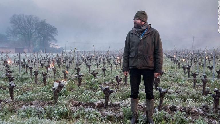 主要生産地で30年ぶりの霜被害、フランスのワイン産業に打撃
