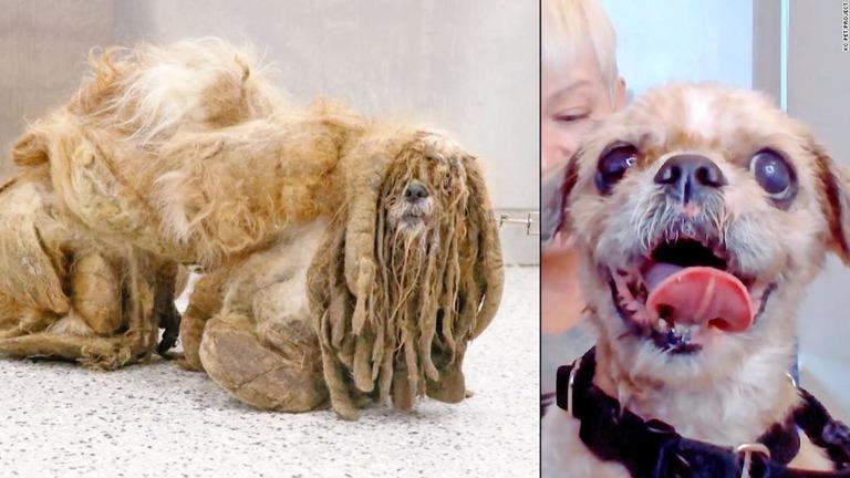 何の動物か判別不能に、毛が伸びっぱなしの野良犬を保護 米
