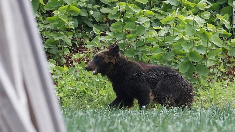 住宅街に現れたクマを駆除、4人襲われ負傷 札幌