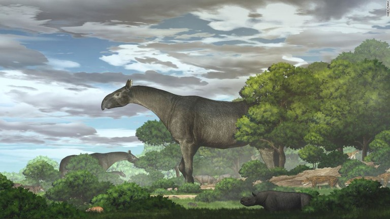 古代の巨大サイ「パラケラテリウム」、新種の化石発見 陸生哺乳類で最大